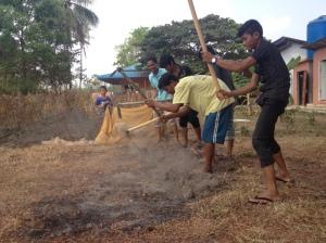 tilling ground