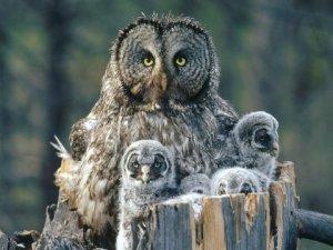 owl_73457-480x360