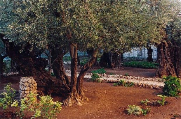 Garden-of-Gethsemane-Jerusalem